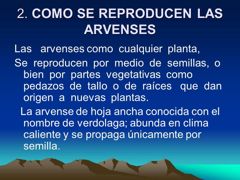 2. COMO SE REPRODUCEN LAS ARVENSES