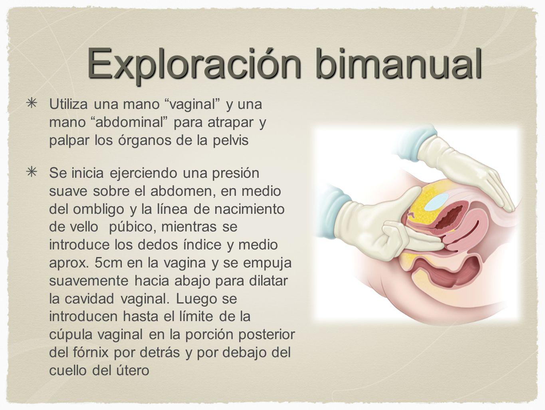 Exploración bimanual Utiliza una mano vaginal y una mano abdominal para atrapar y palpar los órganos de la pelvis.