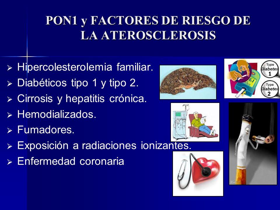 PON1 y FACTORES DE RIESGO DE LA ATEROSCLEROSIS