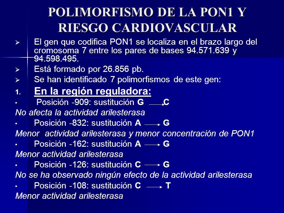 POLIMORFISMO DE LA PON1 Y RIESGO CARDIOVASCULAR