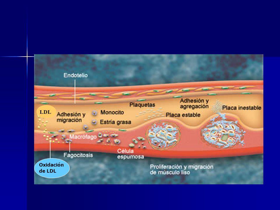 LDL Oxidación de LDL