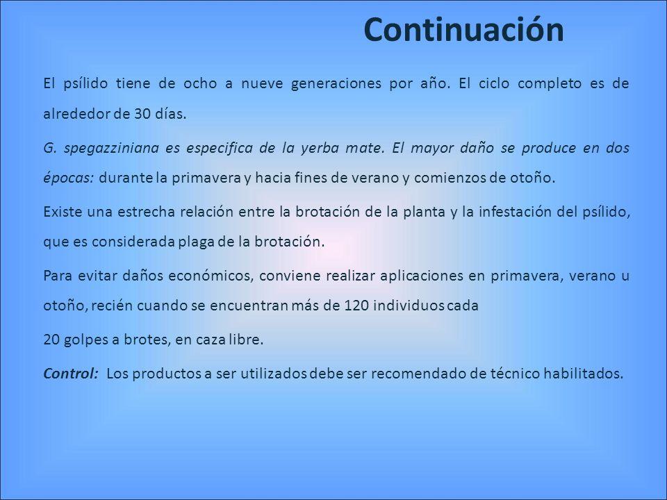 ContinuaciónEl psílido tiene de ocho a nueve generaciones por año. El ciclo completo es de alrededor de 30 días.
