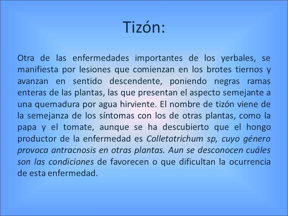 Tizón: