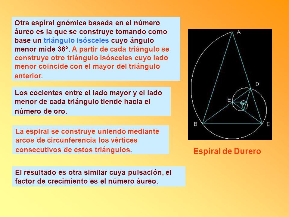 Otra espíral gnómica basada en el número áureo es la que se construye tomando como base un triángulo isósceles cuyo ángulo menor mide 36°. A partir de cada triángulo se construye otro triángulo isósceles cuyo lado menor coincide con el mayor del triángulo anterior.