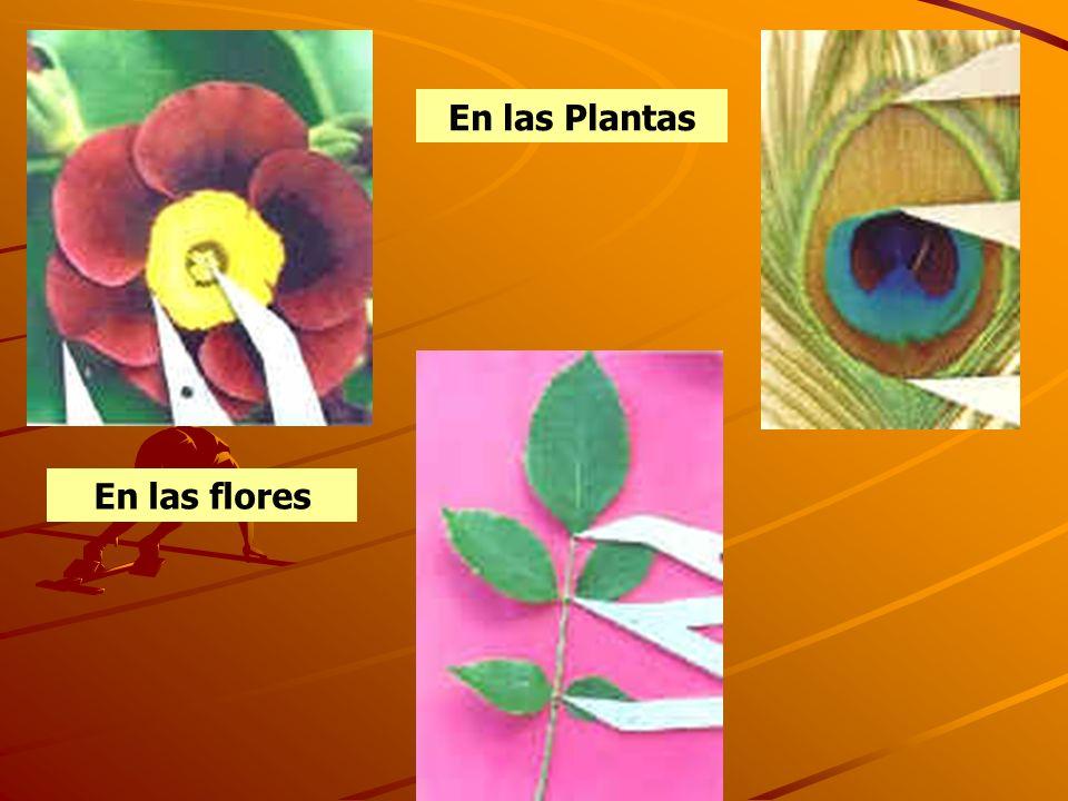 En las Plantas En las flores