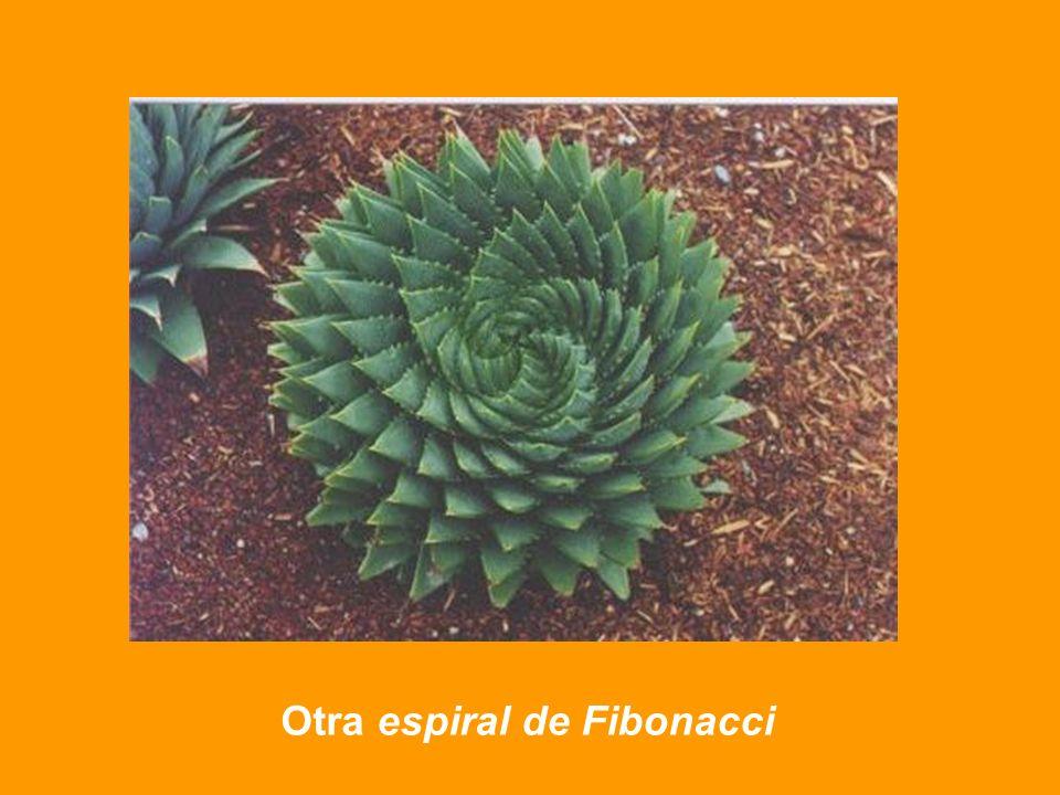 Otra espiral de Fibonacci