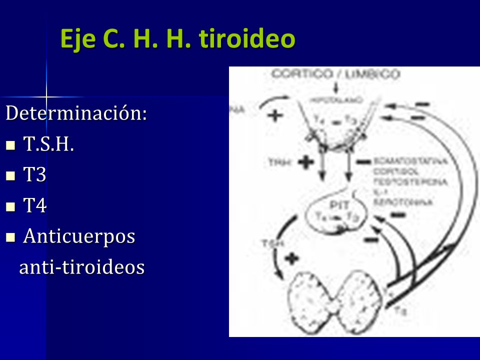 Eje C. H. H. tiroideo Determinación: T.S.H. T3 T4 Anticuerpos
