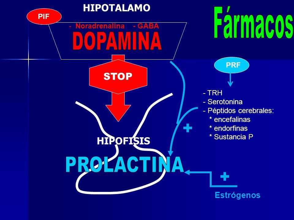 + + Fármacos DOPAMINA PROLACTINA HIPOTALAMO STOP HIPOFISIS Estrógenos