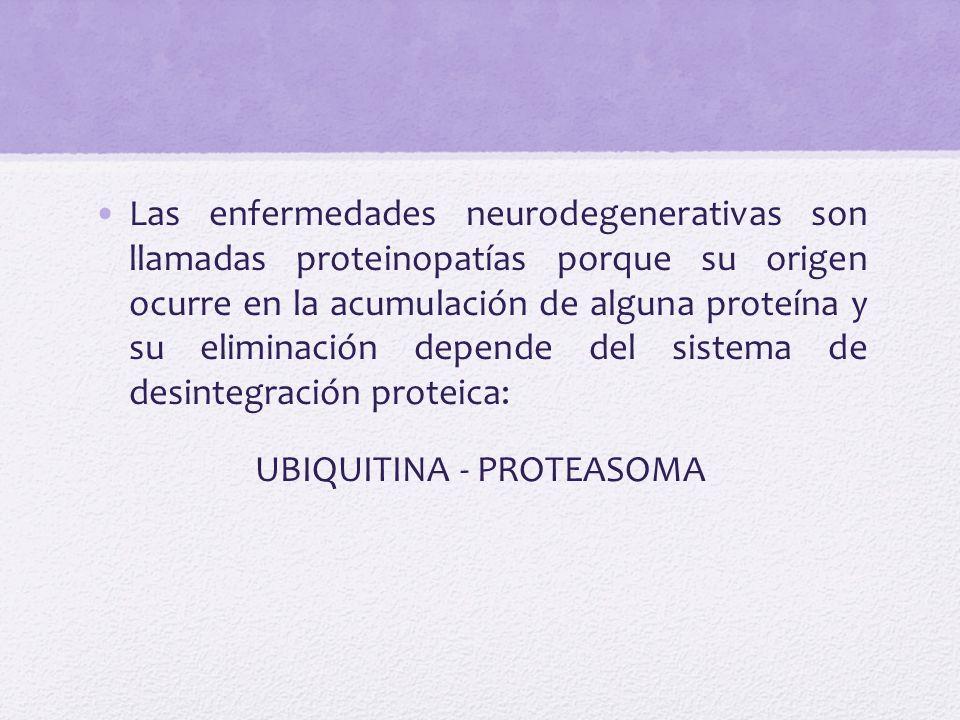 UBIQUITINA - PROTEASOMA