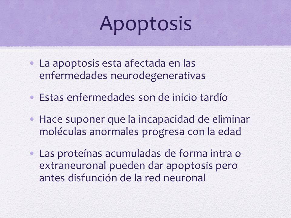 Apoptosis La apoptosis esta afectada en las enfermedades neurodegenerativas. Estas enfermedades son de inicio tardío.