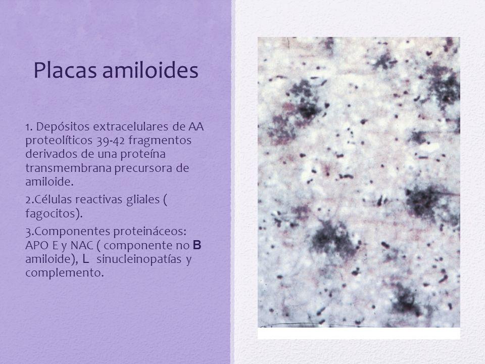 Placas amiloides 1. Depósitos extracelulares de AA proteolíticos 39-42 fragmentos derivados de una proteína transmembrana precursora de amiloide.