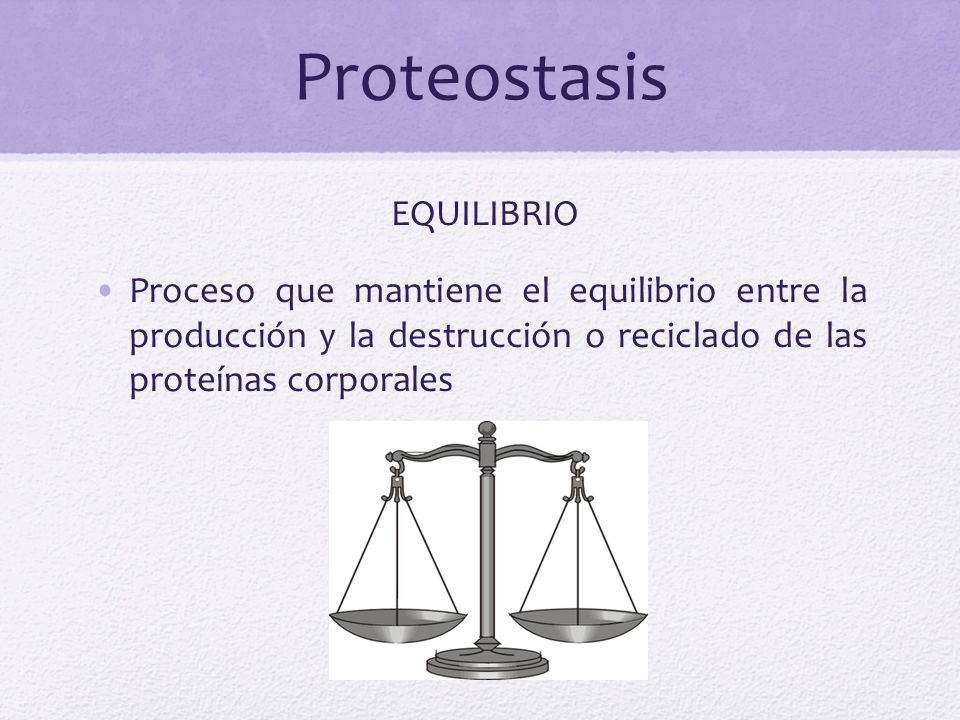 Proteostasis EQUILIBRIO