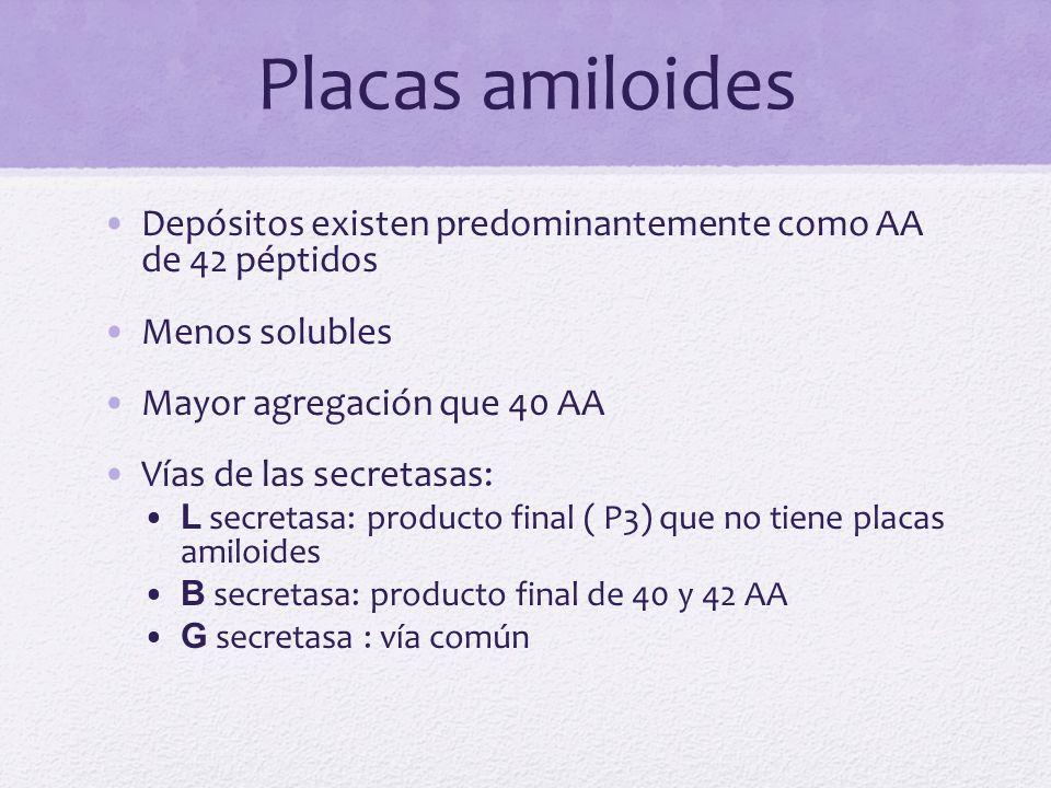 Placas amiloides Depósitos existen predominantemente como AA de 42 péptidos. Menos solubles. Mayor agregación que 40 AA.