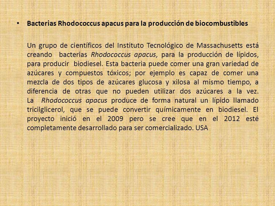 Bacterias Rhodococcus apacus para la producción de biocombustibles