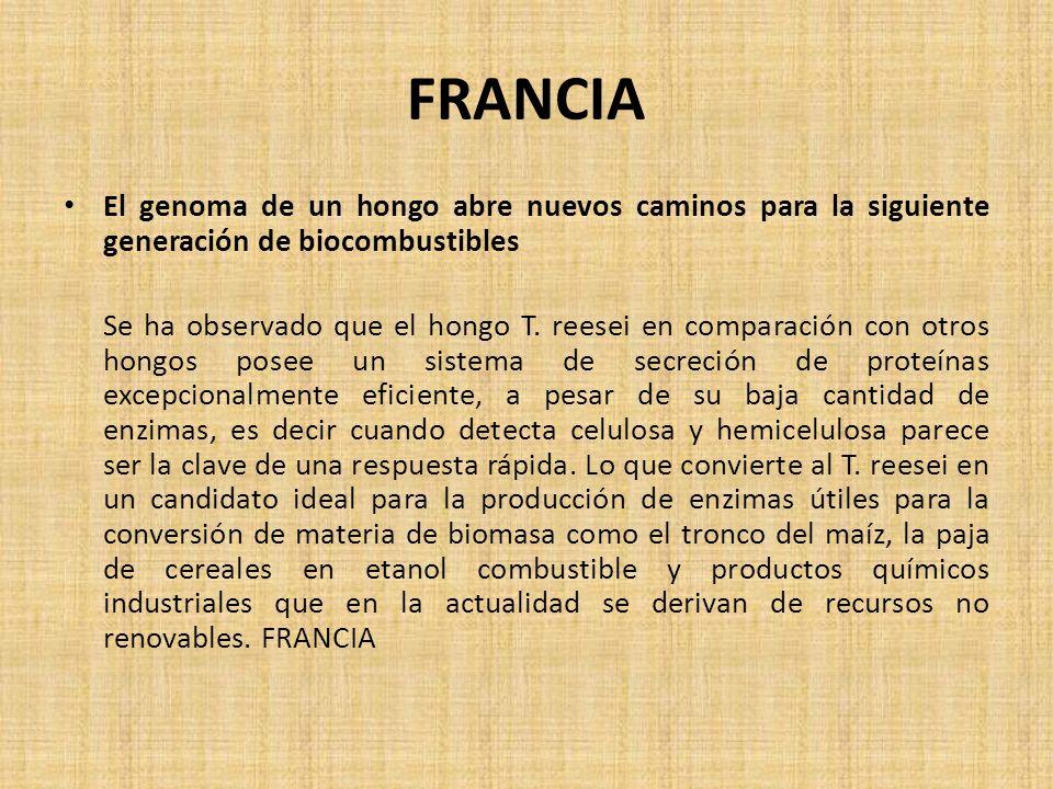FRANCIA El genoma de un hongo abre nuevos caminos para la siguiente generación de biocombustibles.