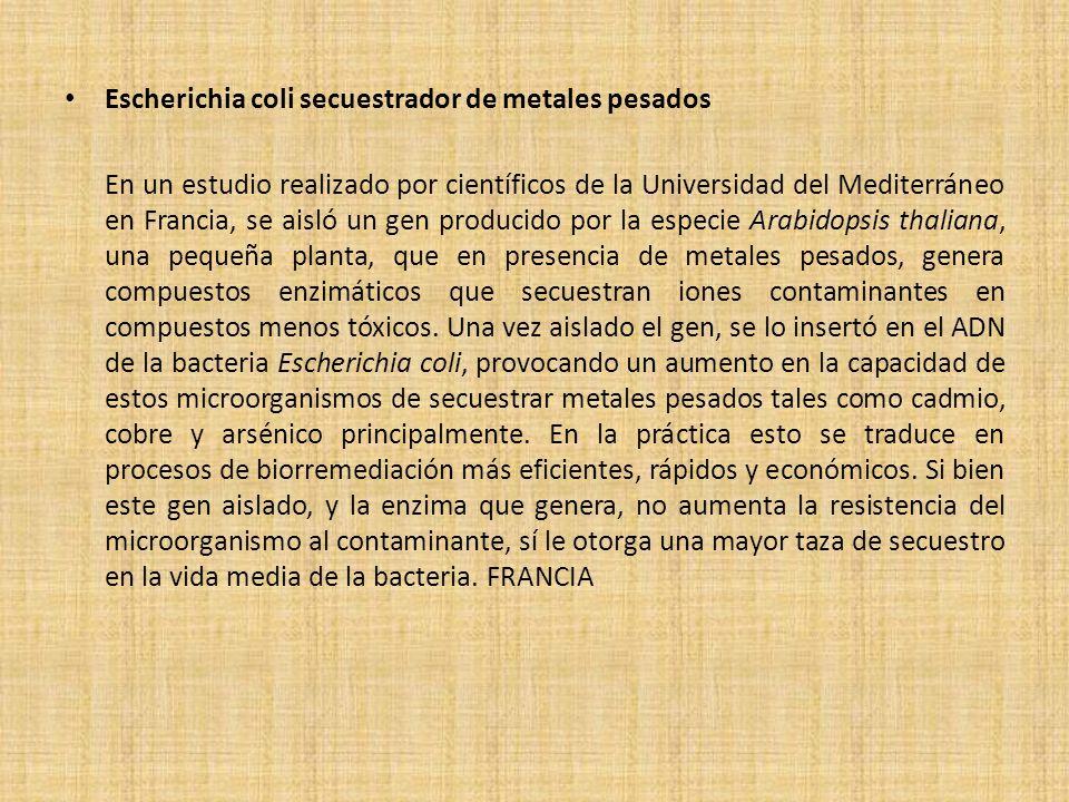 Escherichia coli secuestrador de metales pesados