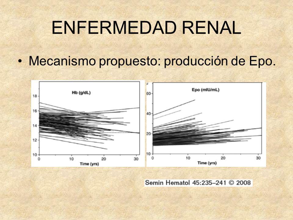 ENFERMEDAD RENAL Mecanismo propuesto: producción de Epo.