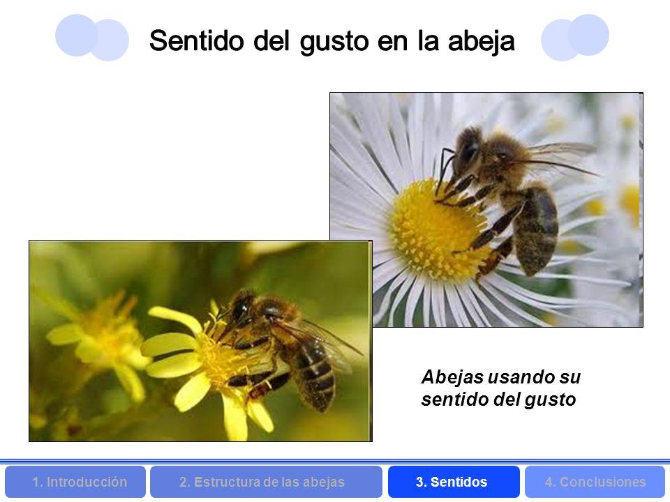 2. Estructura de las abejas