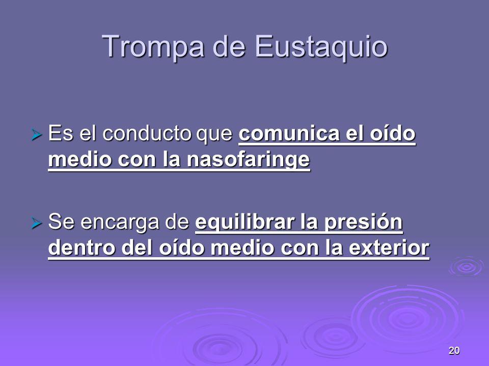 Trompa de Eustaquio Es el conducto que comunica el oído medio con la nasofaringe.