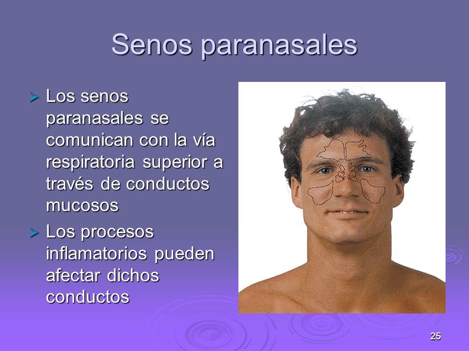 Senos paranasales Los senos paranasales se comunican con la vía respiratoria superior a través de conductos mucosos.