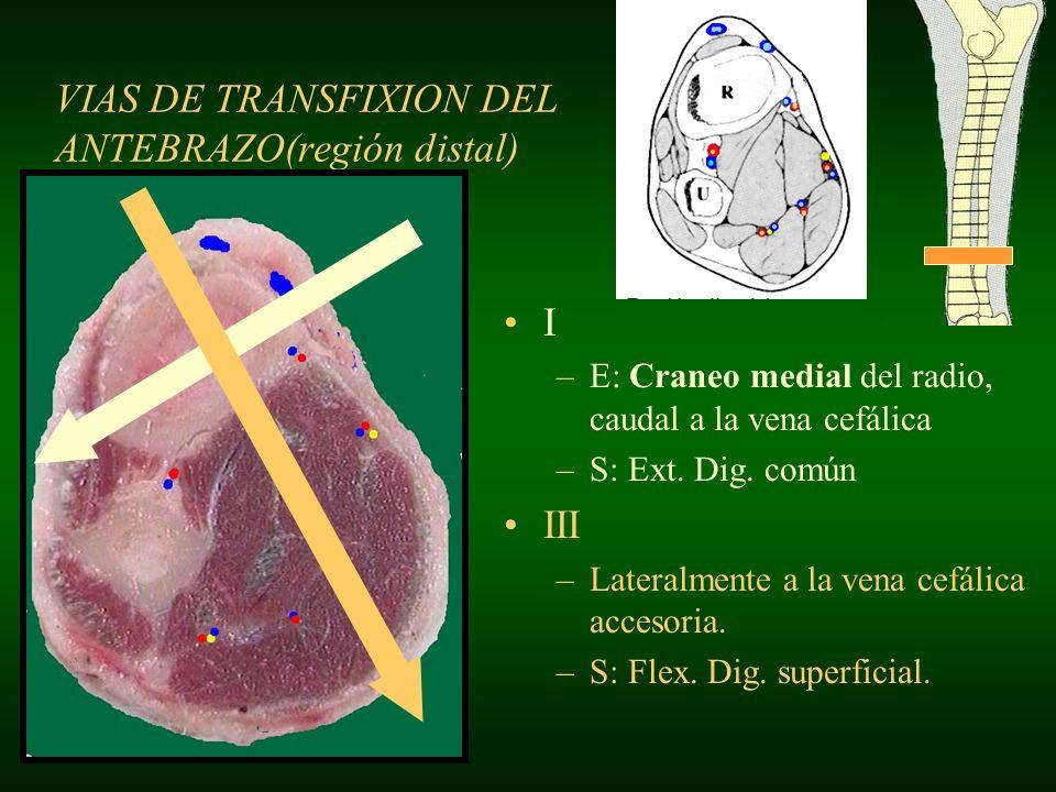VIAS DE TRANSFIXION DEL ANTEBRAZO(región distal)