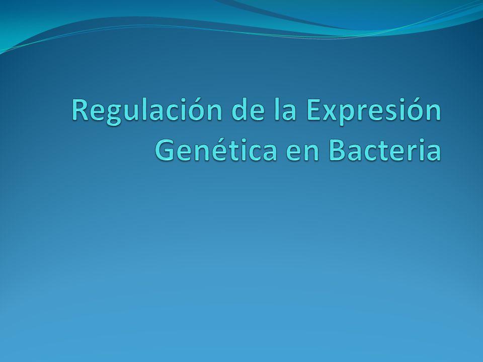 Regulación de la Expresión Genética en Bacteria