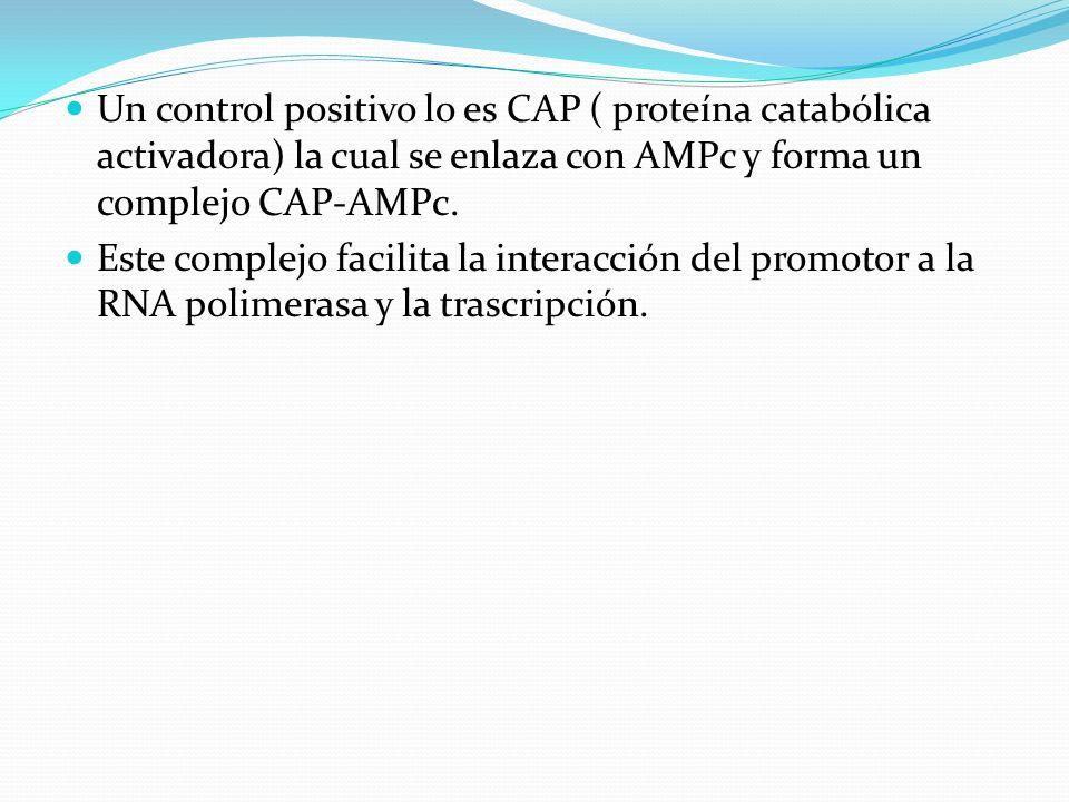 Un control positivo lo es CAP ( proteína catabólica activadora) la cual se enlaza con AMPc y forma un complejo CAP-AMPc.