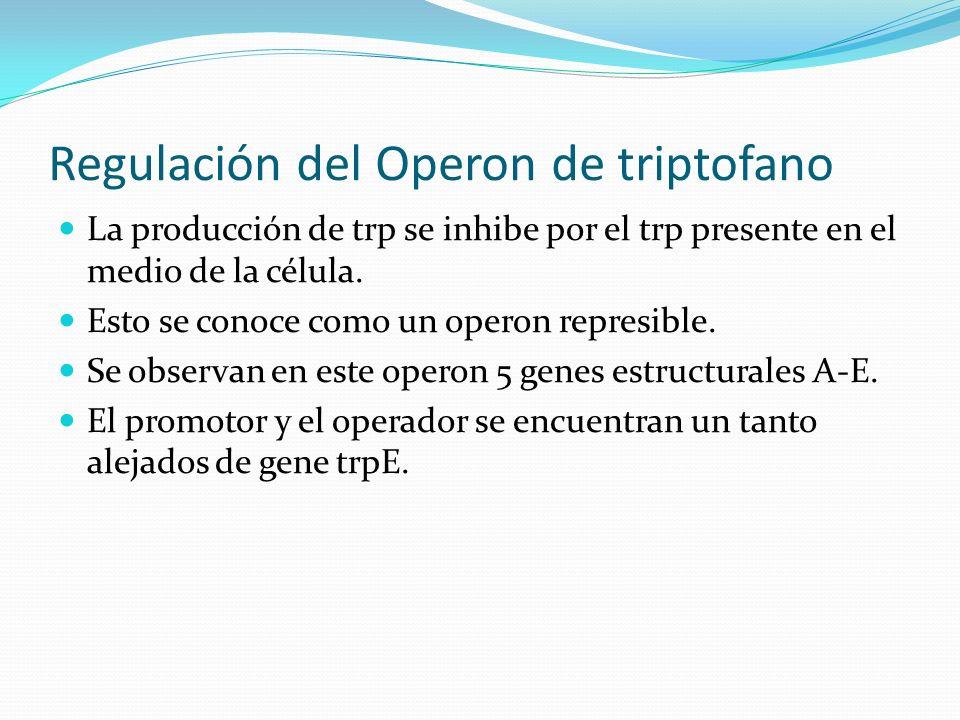 Regulación del Operon de triptofano