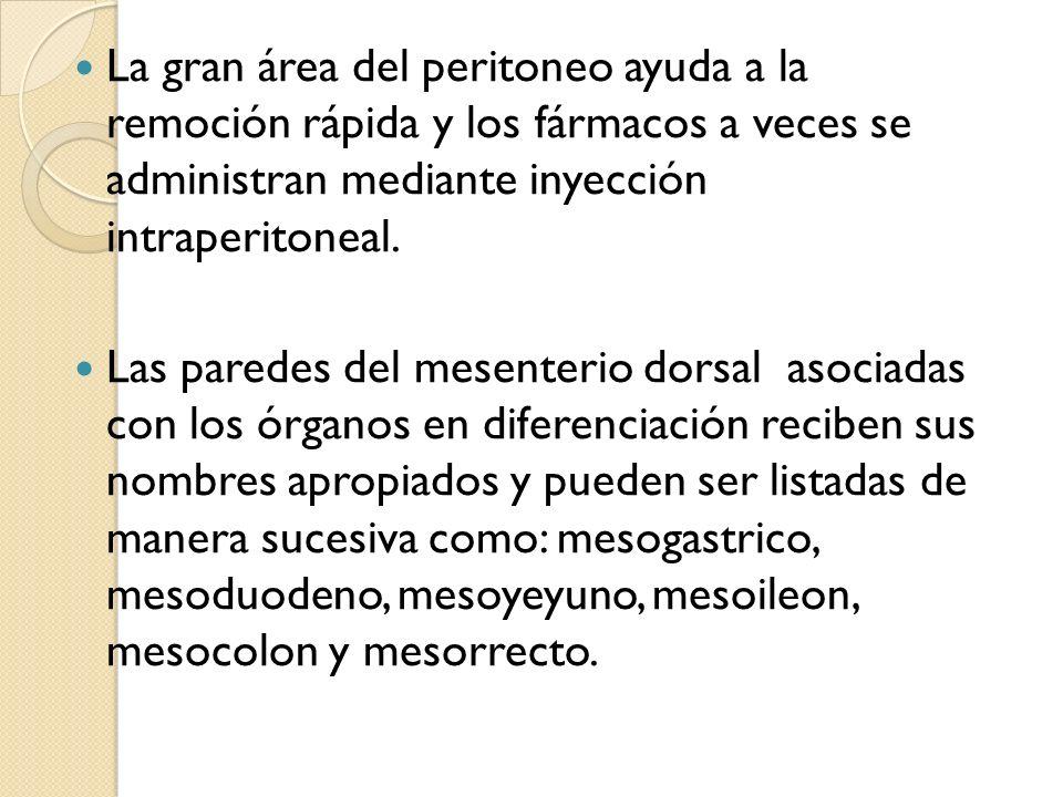 La gran área del peritoneo ayuda a la remoción rápida y los fármacos a veces se administran mediante inyección intraperitoneal.