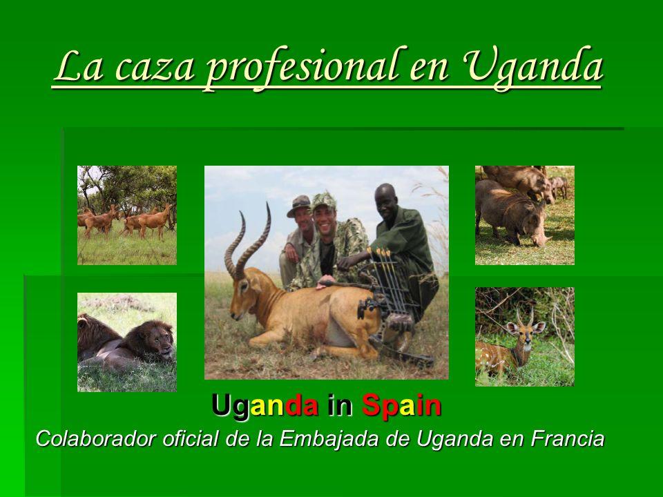 La caza profesional en Uganda