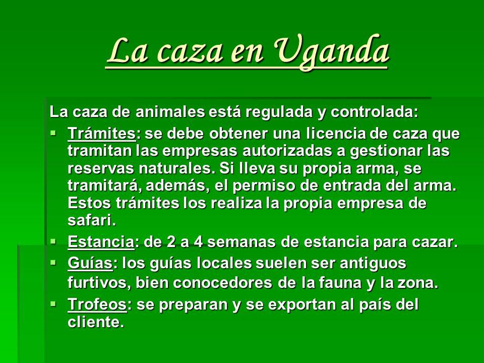 La caza en Uganda La caza de animales está regulada y controlada: