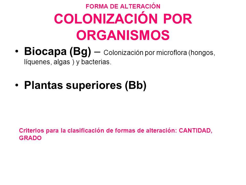 FORMA DE ALTERACIÓN COLONIZACIÓN POR ORGANISMOS