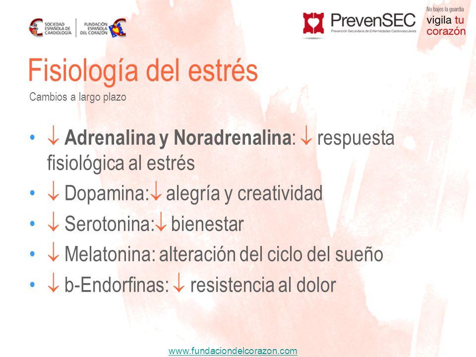 Fisiología del estrés Cambios a largo plazo.  Adrenalina y Noradrenalina:  respuesta fisiológica al estrés.
