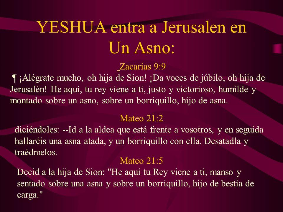 YESHUA entra a Jerusalen en Un Asno:
