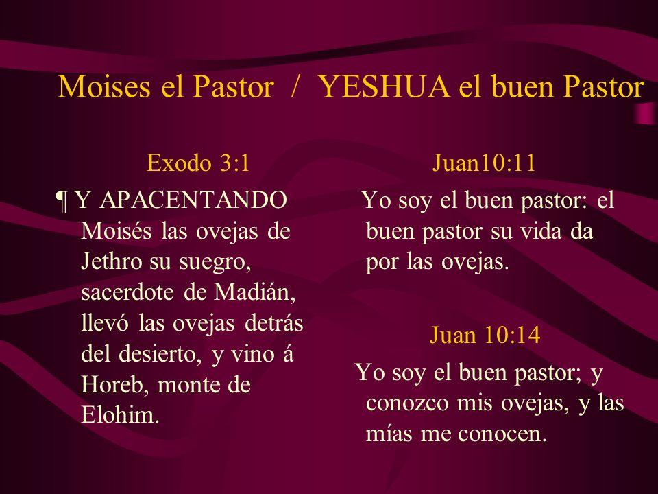 Moises el Pastor / YESHUA el buen Pastor