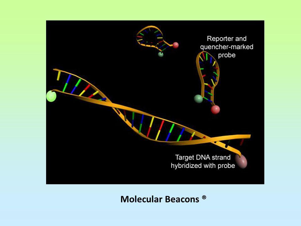 Molecular Beacons ®