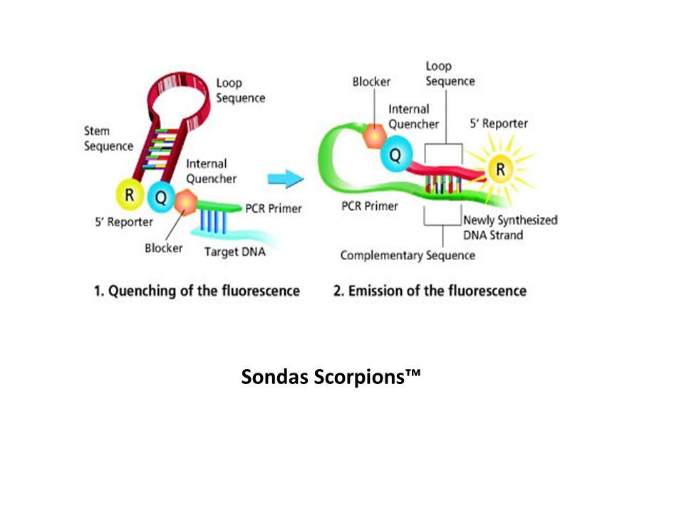 Sondas Scorpions™