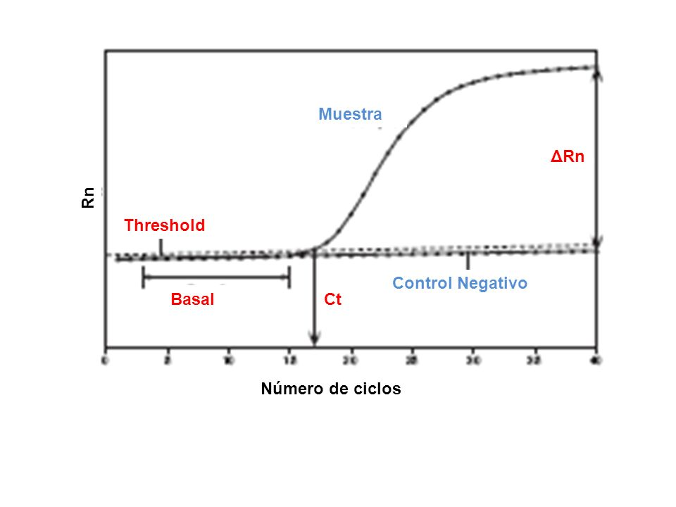 Muestra ΔRn Rn Threshold Control Negativo Basal Ct Número de ciclos