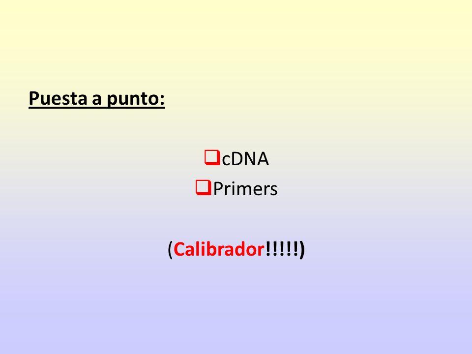 Puesta a punto: cDNA Primers (Calibrador!!!!!)