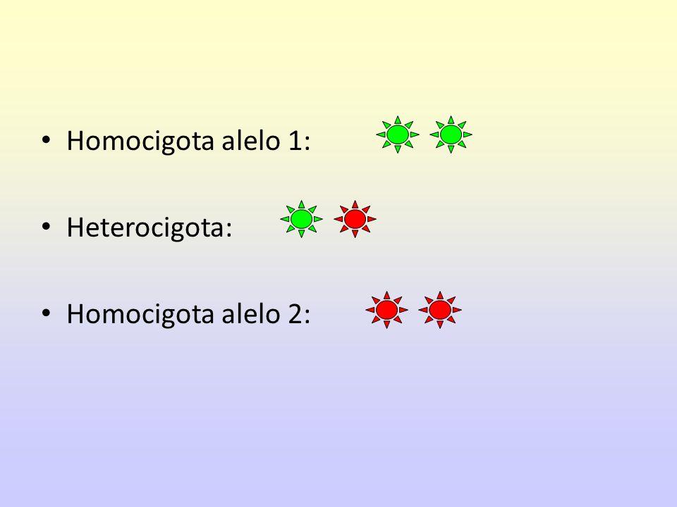 Homocigota alelo 1: Heterocigota: Homocigota alelo 2: