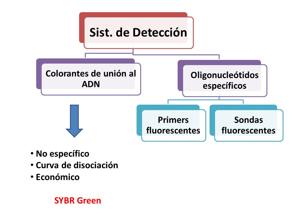 Colorantes de unión al ADN Oligonucleótidos específicos