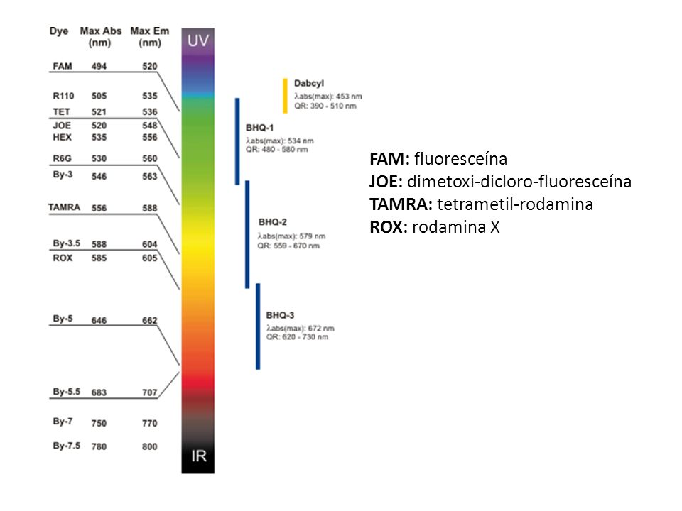 FAM: fluoresceína JOE: dimetoxi-dicloro-fluoresceína TAMRA: tetrametil-rodamina ROX: rodamina X