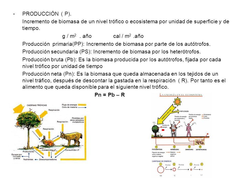PRODUCCIÓN ( P). Incremento de biomasa de un nivel trófico o ecosistema por unidad de superficie y de tiempo.