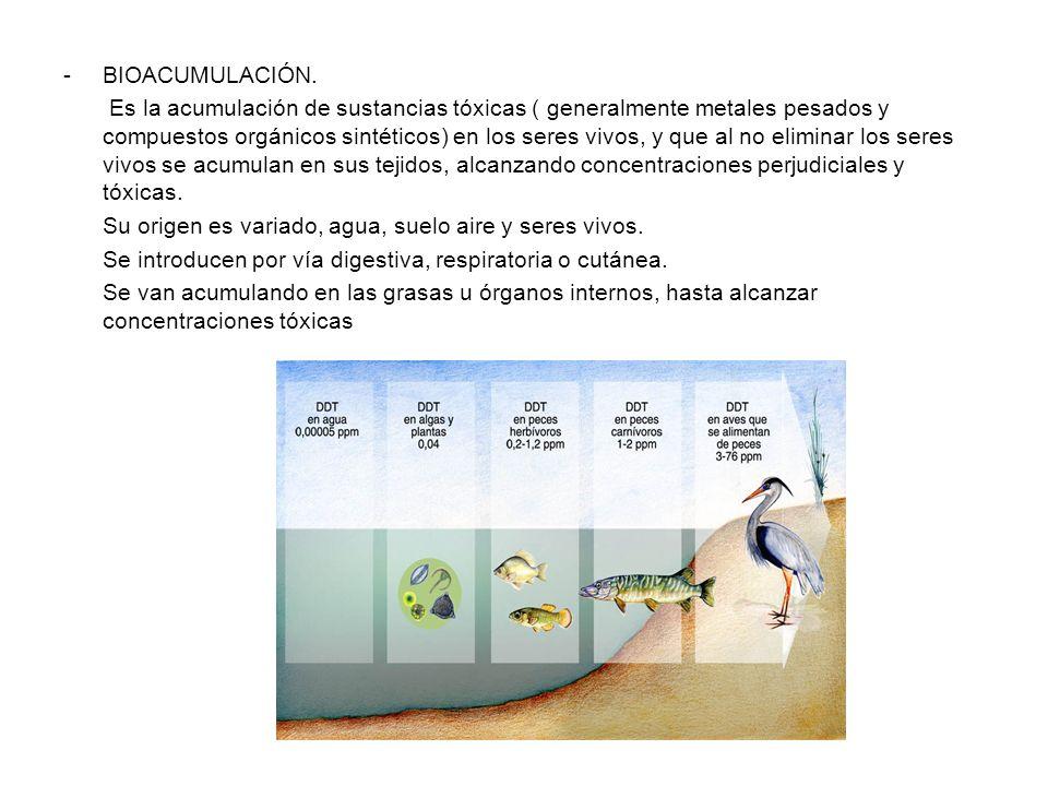 BIOACUMULACIÓN.