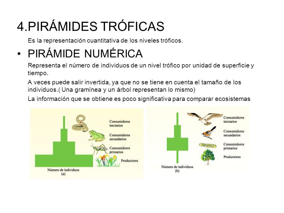 4.PIRÁMIDES TRÓFICAS PIRÁMIDE NUMÉRICA