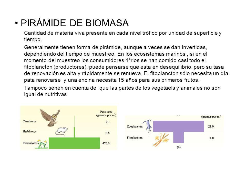 PIRÁMIDE DE BIOMASA