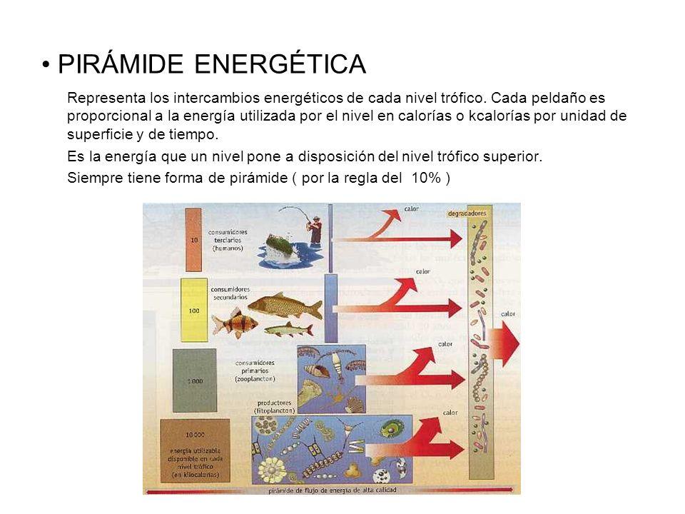 PIRÁMIDE ENERGÉTICA