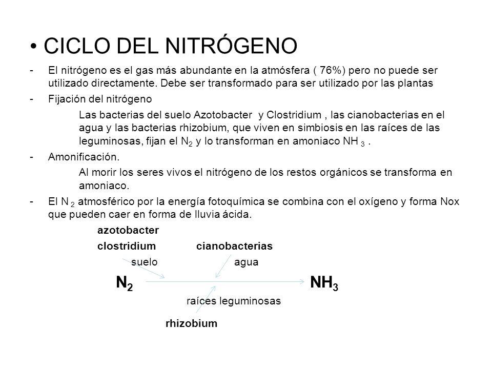 CICLO DEL NITRÓGENO N2 NH3 rhizobium