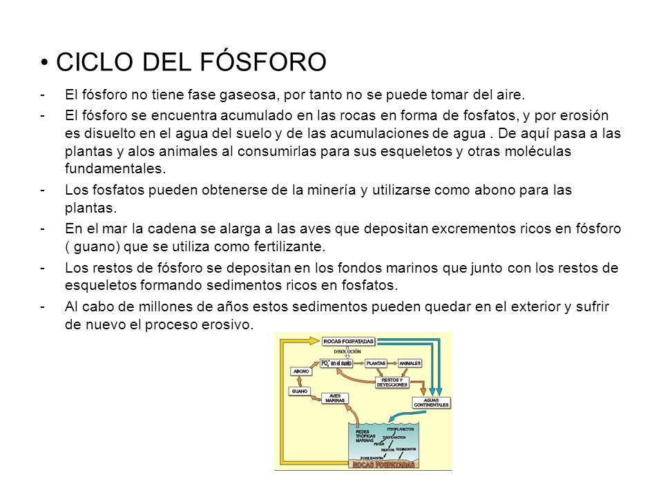 CICLO DEL FÓSFOROEl fósforo no tiene fase gaseosa, por tanto no se puede tomar del aire.