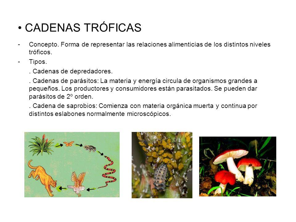 CADENAS TRÓFICAS Concepto. Forma de representar las relaciones alimenticias de los distintos niveles tróficos.